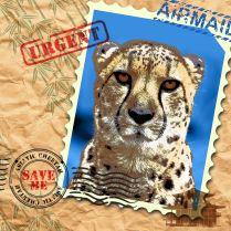 EndAn1 cheetah