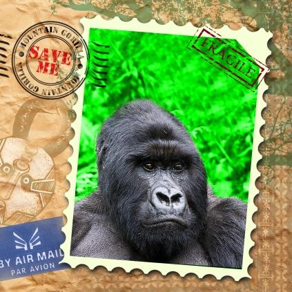 EndAn10 mountain gorilla