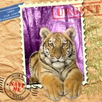EndAn11 tiger