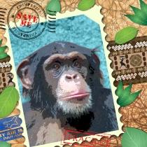 EndAn16 chimp