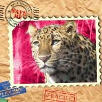 EndAn17 amur leopard