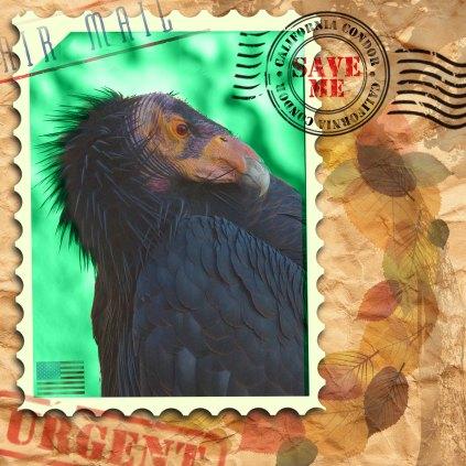 EndAn4 california condor
