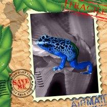 EndAn5 poison dart frog