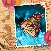 EndAn6 monarch butterfly