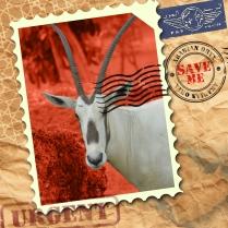 EndAn7 Arabian Oryx